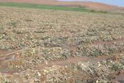 سیل ۲۵ میلیارد ریال به بخش کشاورزی راز و جرگلان خسارت زد