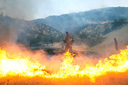 آتش در ارتفاعات دشتستان شعلهور شد
