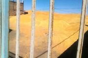 ۸ میلیارد و  ۸۰۰میلیون تومان ارزش گندم دولتی نزد یک شرکت متخلف | دستگیری قاچاقچی ارز در فرودگاه گرگان