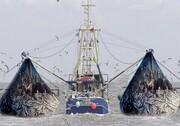 بلایی که صید ترال بر سر زیستگاه ها و آبزیان می آورد