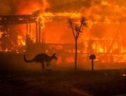 هلاکت سه میلیارد حیوان در آتش سوزی جنگلهای استرالیا
