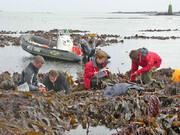 کشف جلبک بازمانده از عصر یخبندان در سواحل بریتانیا