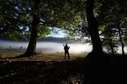 فیلم   نظارت با چشمان بسته و چوب حراج به جنگلهای شمال