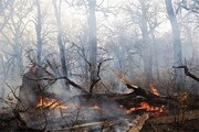 سریال غمانگیز آتشسوزیهای پیدرپی در زاگرس و پاسخگو نبودن مسئولان