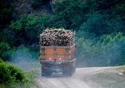ضرب و شتم نیروهای منابع طبیعی گرگان توسط قاچاقچیان چوب