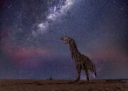 تصاویر   حیوانات غولپیکر در سواحل استرالیا   سرنوشت چوبهای آبآورده در دوران شیوع کرونا