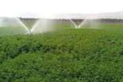 الگوی موفق کشاورزی در دشت سیستان