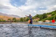 تصاویر | پرورش ماهی