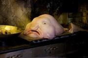 حبابماهی: زشتترین ماهی دنیا