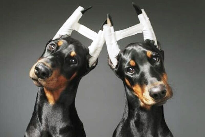 جراحی زیبایی حیوانات خانگی