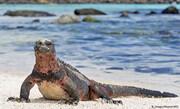 کشف گونههای جدید جانداران در جزایر گالاپاگوس