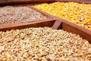 توزیع نهادههای وارداتی در بندر بوشهر سرعت میگیرد | کاهش تلاطم بازار گوشت و مرغ