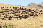 هشدارفرمانده حفاظت منابع طبیعی درباره تخریب مراتع