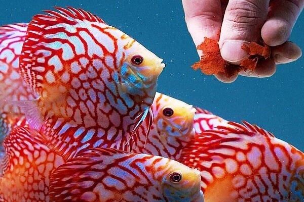 ماهیهای زینتی