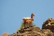 چالش کمآبی در پارک ملی هفتادقله مرکزی