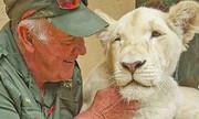 شیر سفید آفریقایی مراقب مهربان خود را کُشت