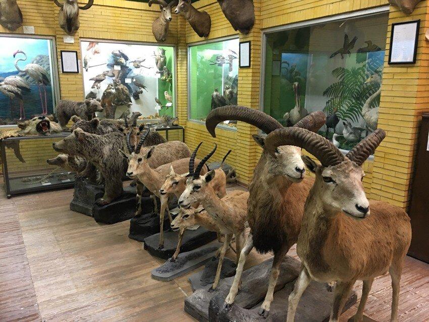 موزه طبیعت و حیات وحش ایران - دارآباد