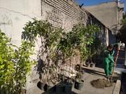 کاشت ۱۵۵ نهال نارنج در محله راه آهن