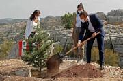 عکس روز | درخت صدسالگی لبنان