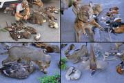 بازداشت فروشنده حیوانات تاکسیدرمی شده در تهران | مجازات تاکسیدرمی گونههای کمیاب چیست؟
