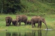تلف شدن ۱۲ بچه فیل در زیمبابوه بر اثر عفونت