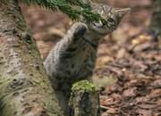 عکس روز| بچه گربه وحشی