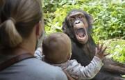 عکس روز | واکنش شامپانزه