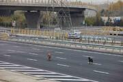 سایه کرونا بر زندگی حیوانات خیابانی