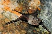 تصاویر | غار خفاش دهلران