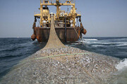 خطری جدی شیوههای جدید صید برای ماهیان خلیج فارس