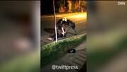 ویدئو | قتل وکیل کلمبیایی به دست پلیس با شوکر به دلیل زیرپاگذاشتن قرنطینه