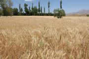 تسویه طلب ۴۱ میلیارد تومانی کشاورزان بروجردی