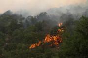 «آتش بر» در جنگلهای شمال تهران