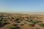 کشت گیاهان مقاوم به خشکی در کویر میقان