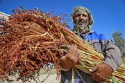 تصاویر   جاروبافی، حرفهای سنتی در روستای ملاحسن