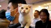 واکسن کرونا برای گربهها هم آزمایش میشود