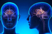 حسگرهایی که اسرار شیمی مغز را برملا میکنند