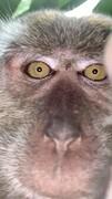عکس روز | سلفی میمون