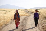 آشو در بخش رقابتی جشنواره مورد تایید اسکار