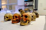حذف نمایش بقایای انسانی در موزه مردمشناسی دانشگاه آکسفورد