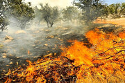 هشت هکتار از مراتع شیروان و فاروج در آتش سوخت