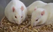 زمان برای انسانها کندتر از موشها میگذرد!