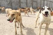نگهداری ۲ هزار سگ بدون صاحب در آرادکوه | پلاککوبی سگها در تهران متوقف شد
