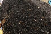 نگهداری دانههای آفتابگردان در مدرسه روستایی گرمه