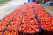صف طولانی صدای گوجهکاران اسدآبادی را درآورد