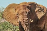 ویدئو   فیلی که زبالههای رهاشده توسط انسانها را جمع میکند
