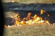میانکاله برای دهمین بار در سال جاری در آتش سوخت