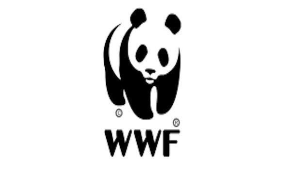 صندوق جهانی حیات وحش