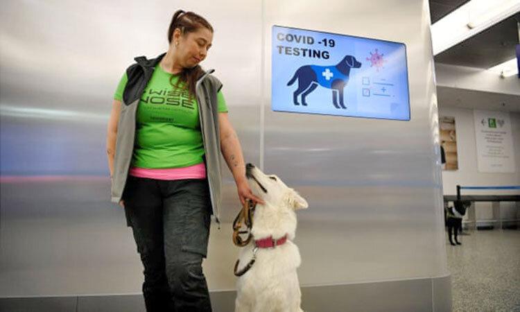 سگ كروناياب در فرودگاه هلسينكي