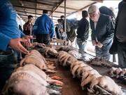 موضع عجیب سازمان محیط زیست در قبال تخلفات خونین در بازار پرنده فریدونکنار